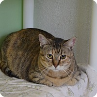 Domestic Shorthair Cat for adoption in Alden, Iowa - Tabitha