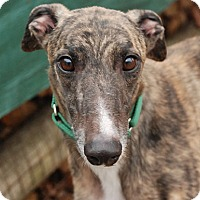 Adopt A Pet :: Murphy - Ware, MA