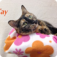 Adopt A Pet :: Tay - Foothill Ranch, CA