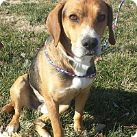 Adopt A Pet :: Rusty- SWEETEST DOG EVER - Allentown, PA