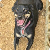 Adopt A Pet :: Phoenix - Williston Park, NY