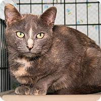 Adopt A Pet :: Myra - Milford, MA