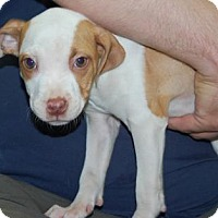 Adopt A Pet :: Teeny - Brooklyn, NY