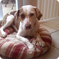 Adopt A Pet :: Dixie - Aurora, IL