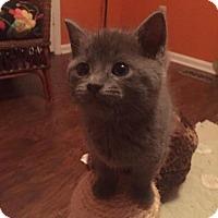 Adopt A Pet :: Javier Del Gato - Reston, VA