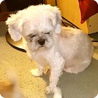 Adopt A Pet :: Madeline - Mechanicsburg, PA