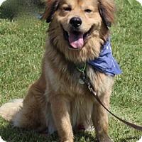 Adopt A Pet :: Smokey - Chester Springs, PA