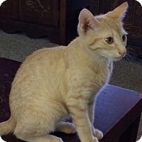Adopt A Pet :: Selena - Devon, PA