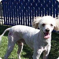 Adopt A Pet :: Jupiter - Chula Vista, CA