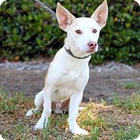 Adopt A Pet :: Hastings - San Diego, CA