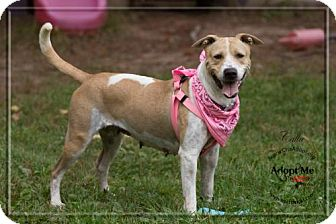 Pit Bull Terrier/Border Collie Mix Dog for adoption in Ashland, Wisconsin - Calla