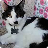 Adopt A Pet :: Elijah - Corona, CA