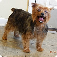 Adopt A Pet :: Bellablue (12 lb) GREAT Girl! - Williamsport, MD