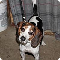 Adopt A Pet :: MaeMae - Liberty Center, OH