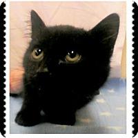 Adopt A Pet :: Bram - Trevose, PA