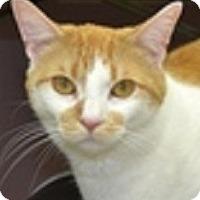 Adopt A Pet :: Dexter-PLAYFUL, GIVES KISSES - Hillside, IL