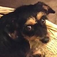 Adopt A Pet :: Ralphie Riviera - Houston, TX