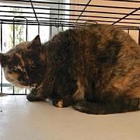 Adopt A Pet :: Spunky - East Stroudsburg, PA