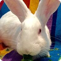 Adopt A Pet :: Dumbledore - Huntsville, AL