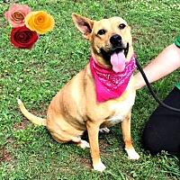 Adopt A Pet :: Ember Lou - Richmond, VA