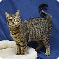Adopt A Pet :: Demi - McCormick, SC