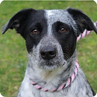 Adopt A Pet :: SAHARA/Low fees/spayed - Red Bluff, CA