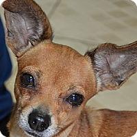 Adopt A Pet :: Pink - Miami, FL