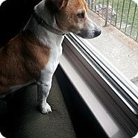 Adopt A Pet :: Iziaha - Hamilton, ON