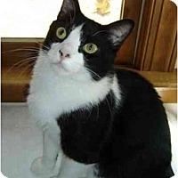 Adopt A Pet :: Lucas - Richmond, VA