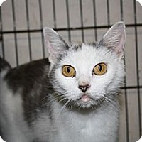 Adopt A Pet :: Tammy - Armuchee, GA