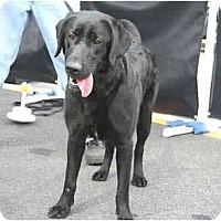 Adopt A Pet :: Callie - Cumming, GA