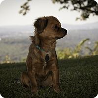 Adopt A Pet :: Rufus - Homewood, AL