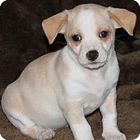 Adopt A Pet :: Sunny - La Habra Heights, CA