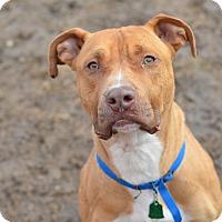 Adopt A Pet :: Lloyd(foster care) - Philadelphia, PA