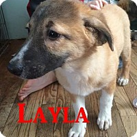 Adopt A Pet :: Layla -Adopted March 2015 - Huntsville, ON