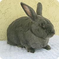 Adopt A Pet :: Teesha - Bonita, CA
