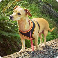 Adopt A Pet :: MARLA - Portland, OR