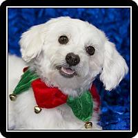 Adopt A Pet :: Danielle - San Diego, CA