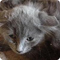 Adopt A Pet :: Rachel - Spring, TX