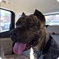 Adopt A Pet :: Penny - calimesa, CA