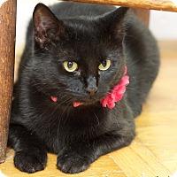 Adopt A Pet :: Miss Minnie - Homewood, AL