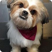 Adopt A Pet :: Cyd Charisse - McKinney, TX