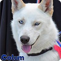 Adopt A Pet :: Colum - Carrollton, TX