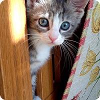 Adopt A Pet :: Maxine - Royal Palm Beach, FL