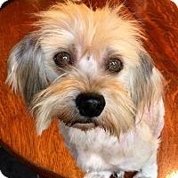 Adopt A Pet :: Glisson - Pittsburgh, PA