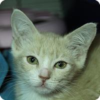 Adopt A Pet :: Click - Sarasota, FL