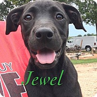 Adopt A Pet :: Jewel - Jay, NY