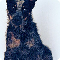 Adopt A Pet :: Poco - Newland, NC