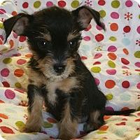 Adopt A Pet :: Truffles - Los Angeles, CA