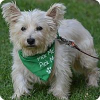 Adopt A Pet :: IRIS - Marina Del Ray, CA